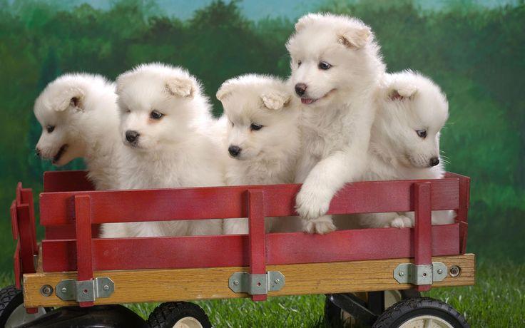 Animaux - Mignon - Chien - Chiot - Chiens - Puppies - Wagon - Animaux Fond d'écran