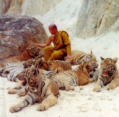 """A Buddhist monk with rescued tigers at """"The Tiger Temple"""", locally known as """"Wat Pa Luangta Bua"""", in the Saiyok District of Kanchanaburi Province, Thailand."""