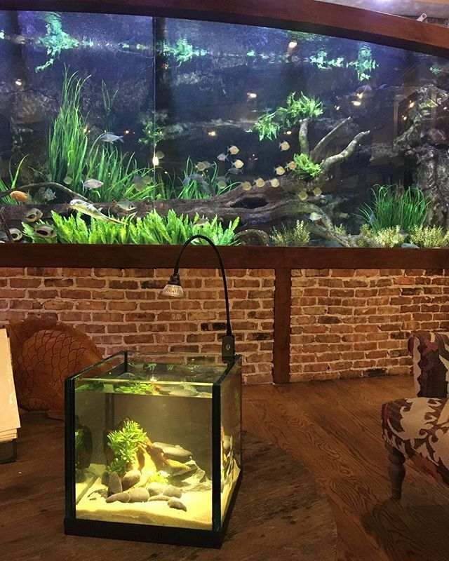 "Custom aquariums of any size! Come in and see our new line by A.G.E - Countertop Customs.  Features 1/2"" glass PVC bottom black or clear silicone 2-15 gallon sizes"