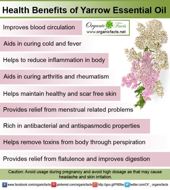 the history and health benefits of aromatherapy Learn about 1000's of uses for essential oils in our growing collection of articles and essential oil list the uses for essential oils (both for health and.