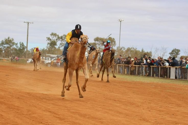 Camel Races, free camping and nightly campfires – what more to want on a July adventure in Queensland's Outback?! Well 'more' you may get, because visitors continue to report sightings of the legendary 'Min Min Light' on the isolated roads to Boulia, so be prepared for adventure on and off the racetrack when you head …