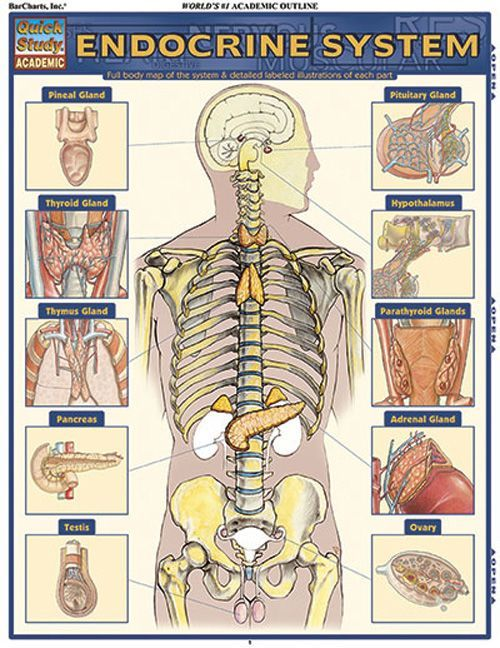 61 best Nursing (Endocrine System) images on Pinterest | Endocrine ...