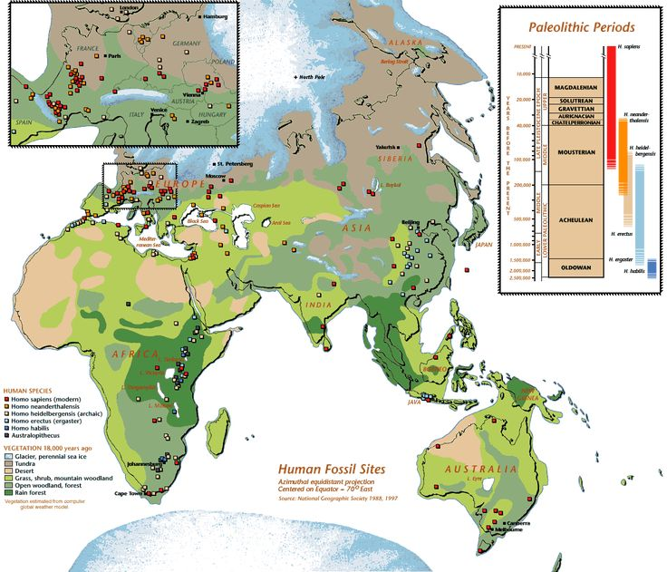 Hominoid And Human Fossil Sites With Biomes