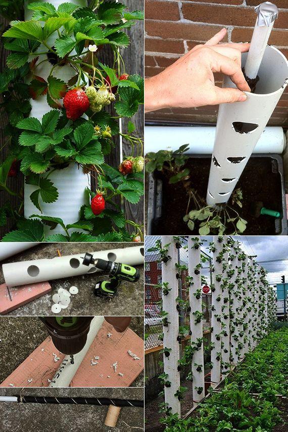 Kreative Handwerksidee Mit Pvc Rohre Fur Diy Behalter Zum Anpflanzen Von Erdbeeren Anpflanzen Behalt Diy Garden Projects Strawberry Garden Strawberry Plants