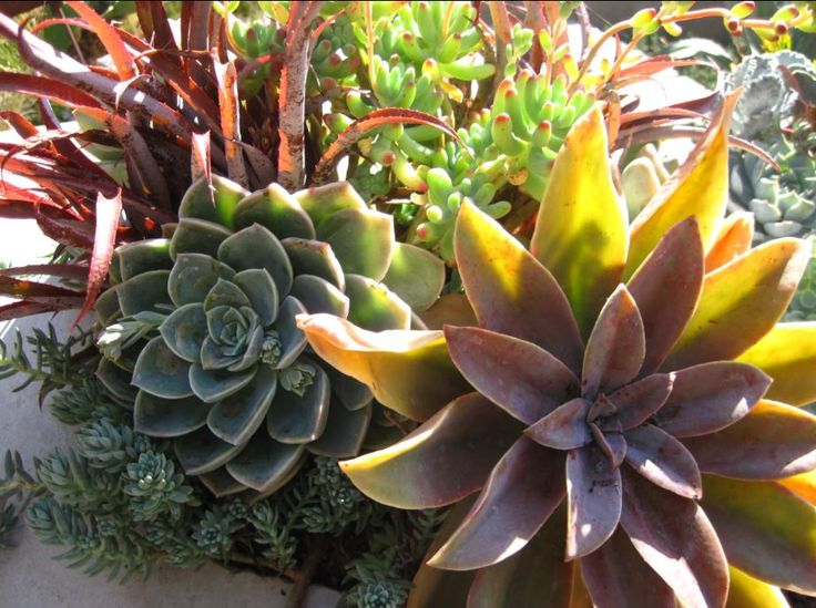Beautiful succulent and Bromeliad combination