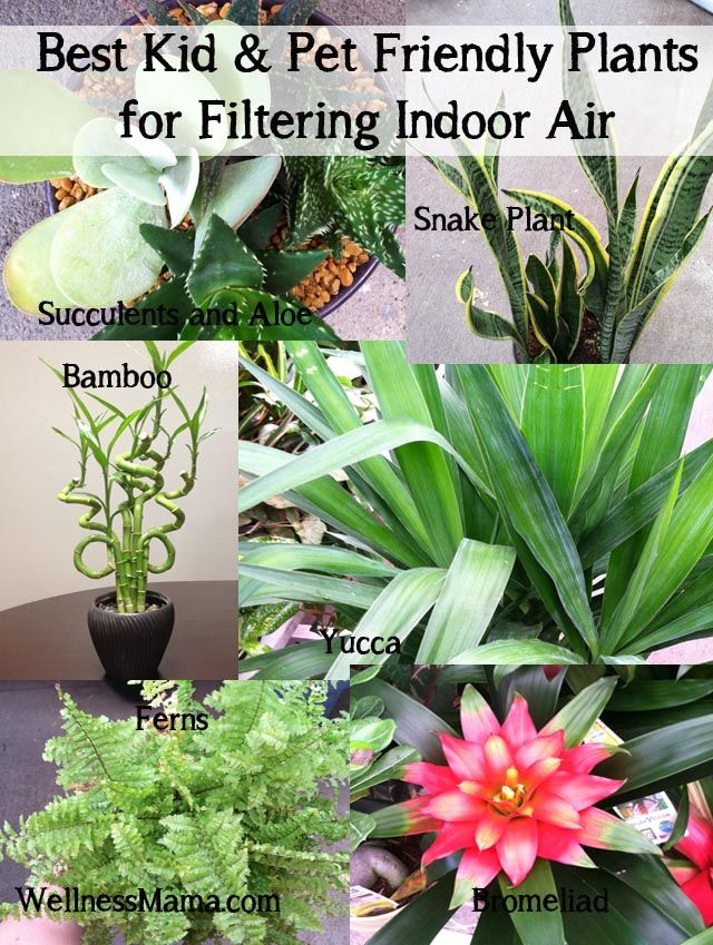 How to Improve Indoor Air Quality Naturally ... best kid and pet friendly plants for filtering indoor air