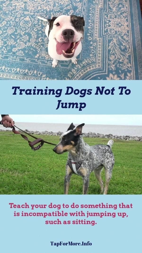 Stop Dog Jumping And Dog Training Tips Socializing Check The Pin