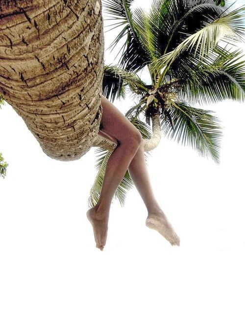 watching the world from a palm tree | pinterest: maria barroso