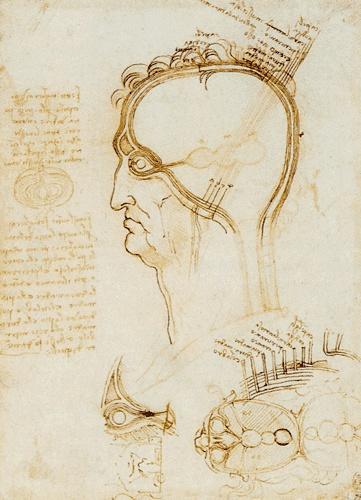 Leonard de Vinci / Coupe verticale et horizontale d'un crâne humain - 1489     Sanguine et plume / 206 x 148 mm   Royal Library – Windsor    Léonard illustre ici l'idée largement répandue au Moyen Age de trois lobes centraux dans le cerveau et de leurs fonctions.