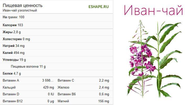 Кипрей иван чай целебные свойства и правила применения чем полезен для организма