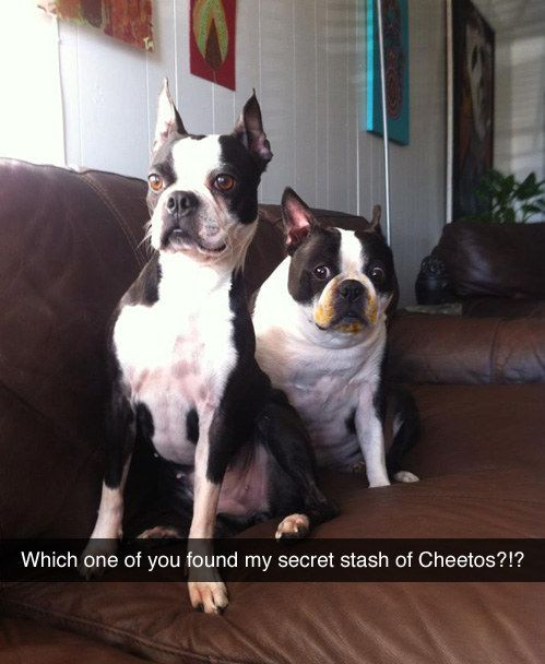 Dog who definitely probably didn't eat the secret stash of Cheetos. | 35 Dogs That Will Make Your Day Instantly Better