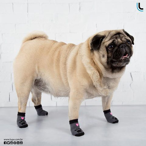 13 best lulupo pet socks images on pinterest athletic dresses e o seu dog j tem as meias lulupo petsocks lulupo fandeluxe Image collections