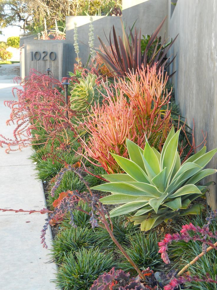 The pleasing multicolor succulent and agave planting is texturally interesting and drought tolerant. Source:http://5thandstate.blogspot.com