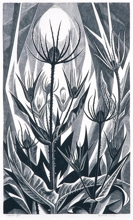 Artist Monica Poole (Born 1921) Title Teasels Medium Wood engraving