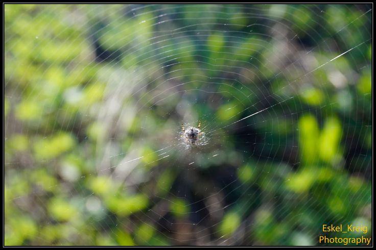 Spider in web by EskelKreig on DeviantArt