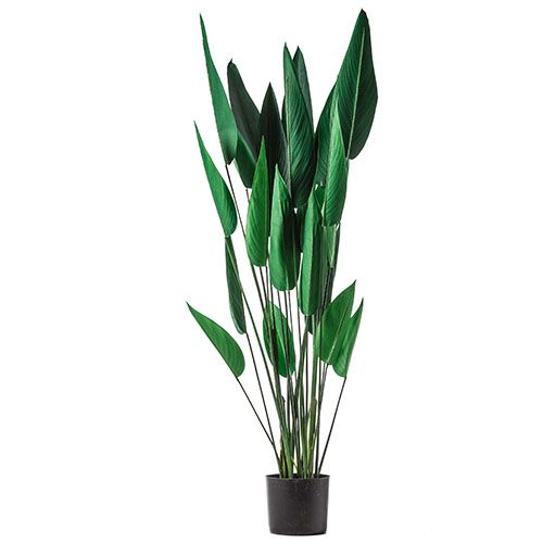 Green Sky Bird Potted Plant
