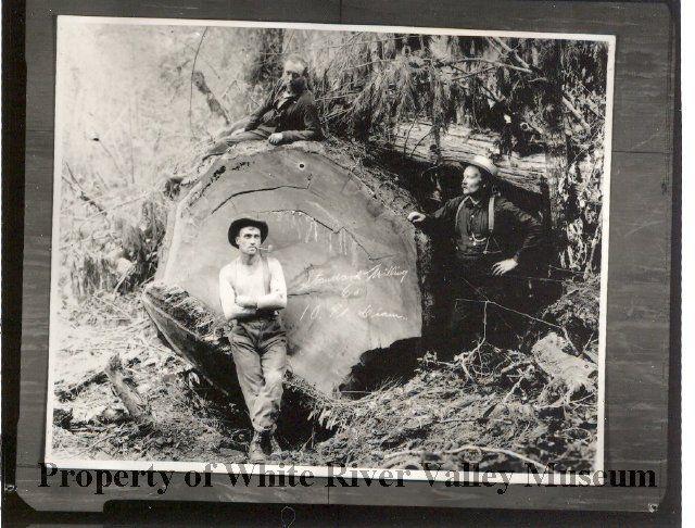 Early Logging circa 1910.