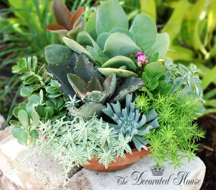 How To Create A Succulent Dish Garden ~ Tutorial