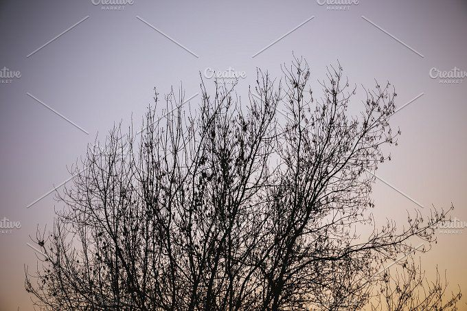 Branches by OSORIOartist on @creativemarket