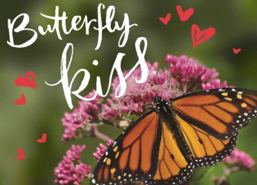 Create a Monarch sanctuary by giving this NRDC Green Gift https://www.nrdcgreengifts.org/butterfly-kiss