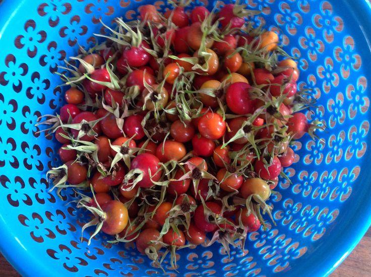 Supersund hyben. Et af naturens vidundere, der blev til lækkert marmelade.