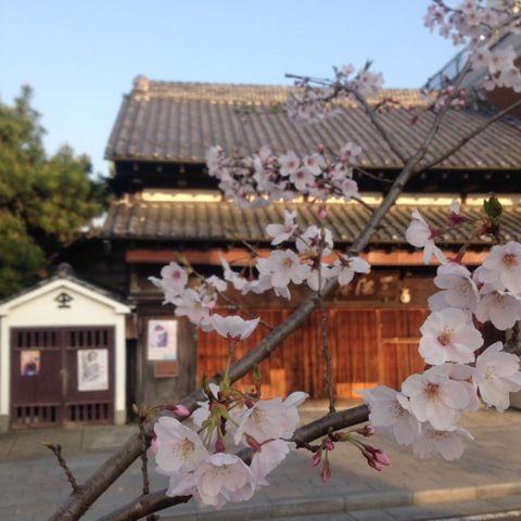 鎌倉犬聞録  Kamakura memoirs from Japan: 花侘 Figure also cherry fall