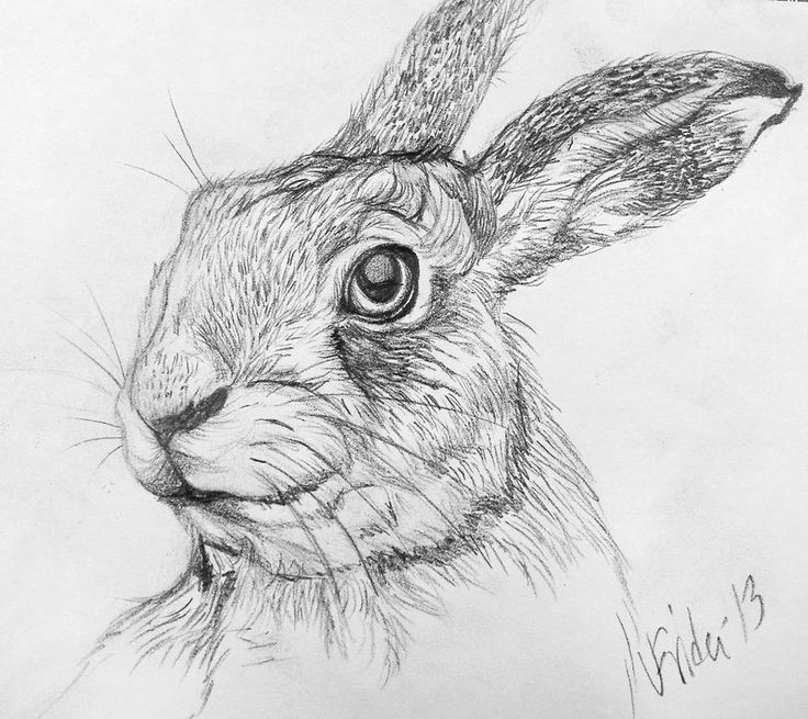 Bunny Face Line Drawing : Pics for gt jackrabbit drawing jumpin jackrabbits and