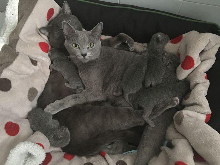 Jambalaya love my russian blue, romanian pussy massage