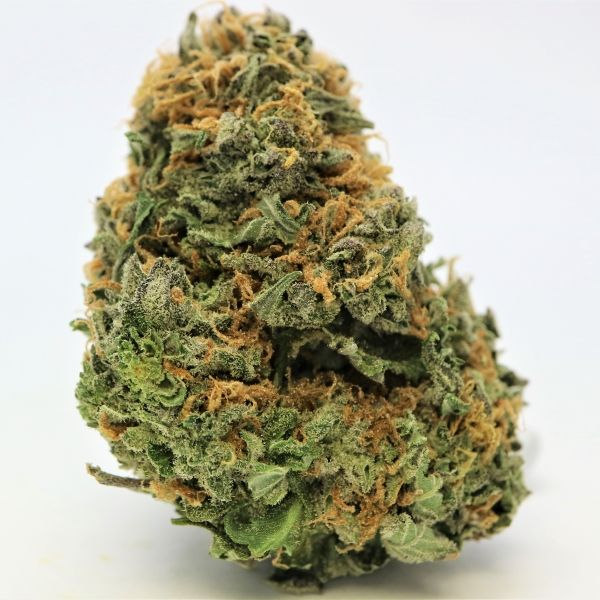 THC 20% Blue Cheese is a 80:20 ratio indica-dominant hybrid. It's a cross of original UK Cheese X Blueberry. The buds are glistening in blue translucent trichomes with orange pistils peaking in the cavity of the buds. It has a significant aroma of sweet berry and a creamy blue cheese to create a unique and reminiscent flavour of the original Cheese. The heavy indica effects will leave you relaxed at the end of a long day. This helps provide relief for muscle spasms, pain and stress.