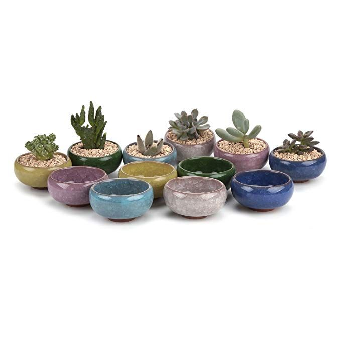 Amazon Com T4u 2 25 Inch Ceramic Mini Korea Style Snow Serial Full Set Succulent Plant Pot Cactus Plant Pot Flower Pot Container Planter Package 1 Pack Of 12
