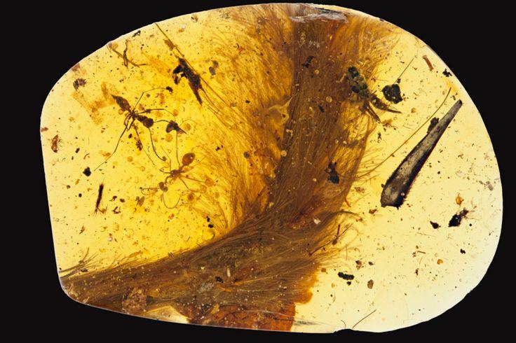 Kin 100 Sol Solar Amarillo Calendario Maya - Tzolkin Onda Encantada del Humano Amarillo Serpiente Emplumada La cola de un dinosaurio con plumas Dragón https://hannahcadesiz.com/2016/12/14/kin-100-sol-solar-amarillo/