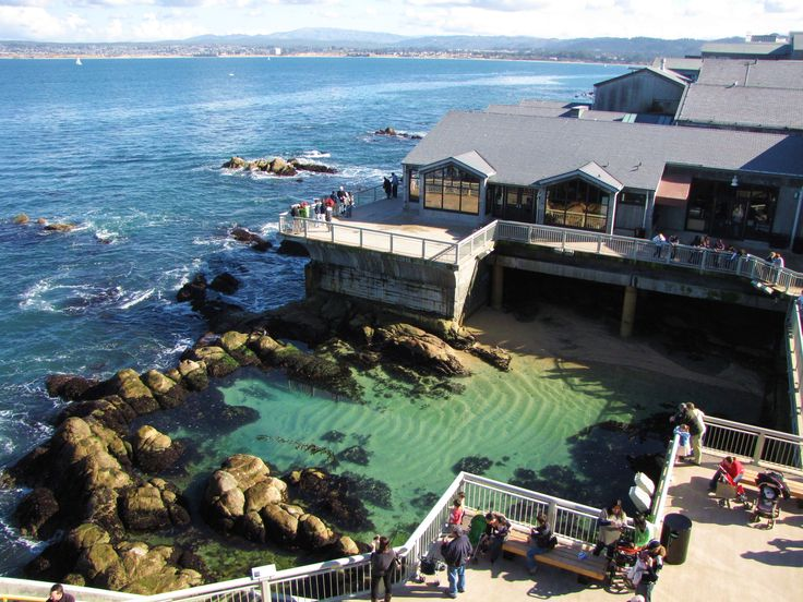 17 best ideas about monterey bay aquarium on pinterest for Monterey fishing trips