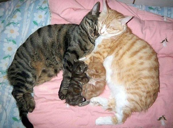 Voici 20 photos de chatons adorables avec leurs mamans ! C'est l'instant tendresse de la journée !