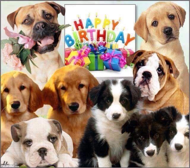 Pin Von Silvia Dubova Auf Pet Birthday Hunde Tiere Tierarzt