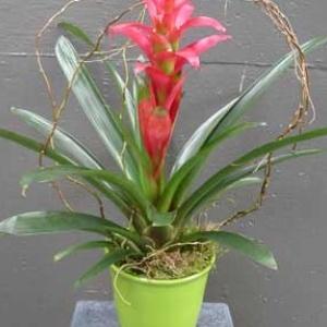 20 Beautiful Indoor Flower Plants Indoor Plants Pinterest
