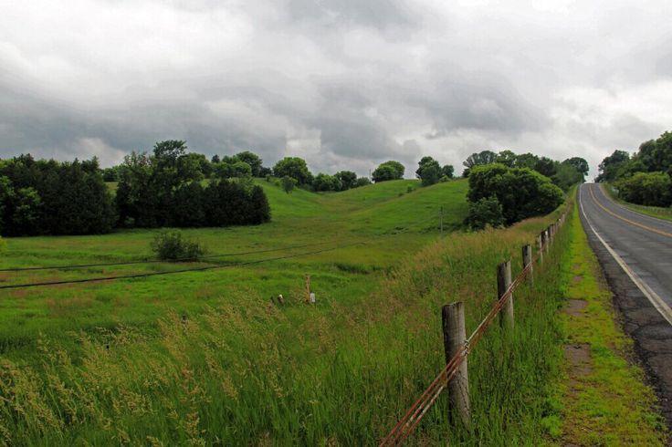 Mt Albert Farm Field