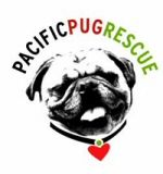 Pacific Pug Rescue! Angels:-)