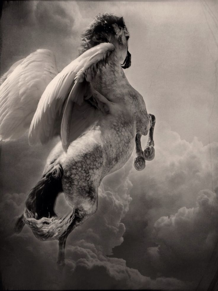 Robin Isely ~ Pegasus