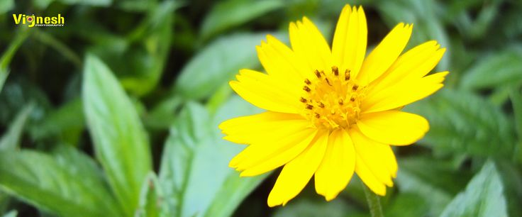 very nicely flower take very short take click capture