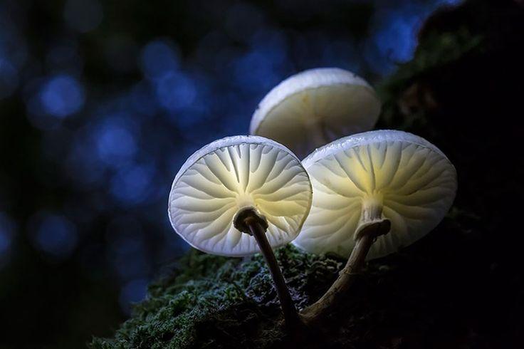 Porcelain+Fungus