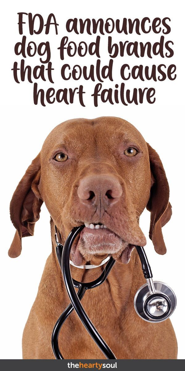 Fda Announces Dog Food Brands That Could Cause Heart Failure Dog