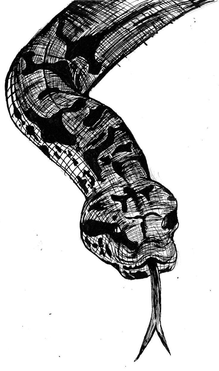 Death adder illustration