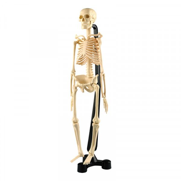 Human Skeleton Model 46cm