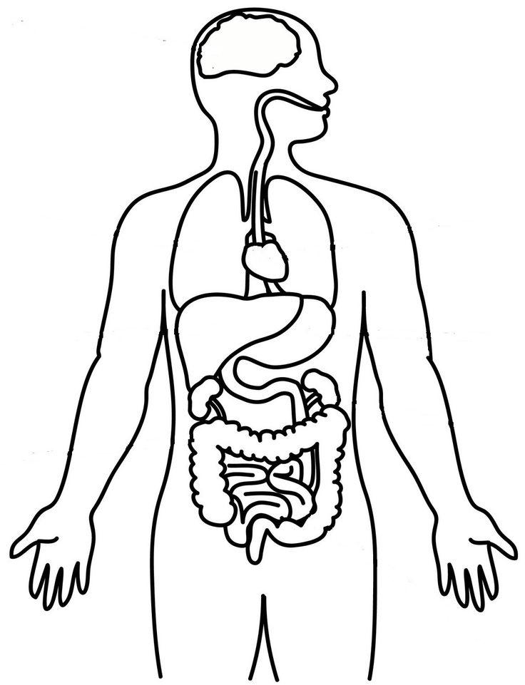humanbodydiagram full size1.jpg – plik udostępniony w usłudze Box
