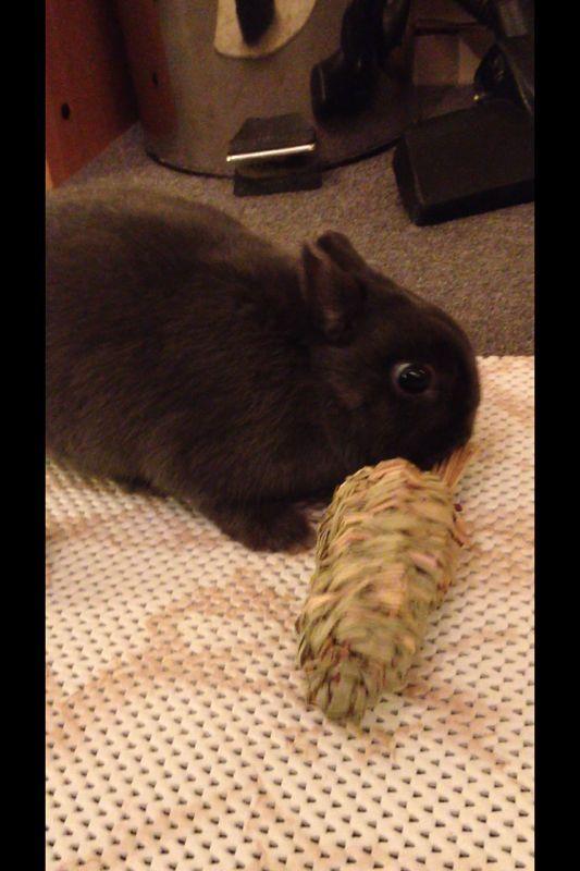 Oe la la carrot?!