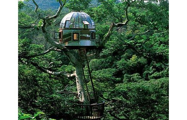 35 best images about okinawa bucket list on pinterest ruins parks and blue skies - Treehouses the absolute freedom ...