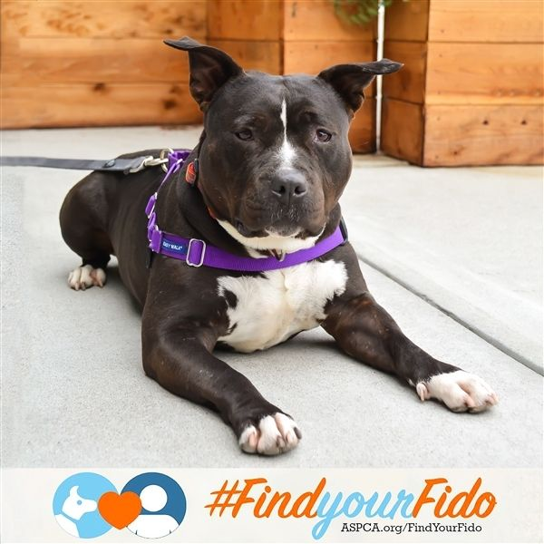 Adopt Pippa On Pitbull Terrier Best Dogs Dogs