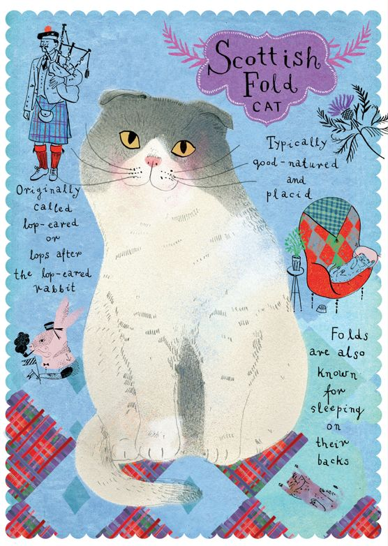 Postallove - Scottish fold cat
