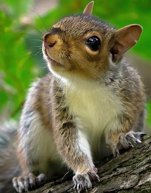 https://www.facebook.com/SquirrelsOfOshawa/photos/a.498035013549460.116670.223086517710979/972629592756664/?type=1