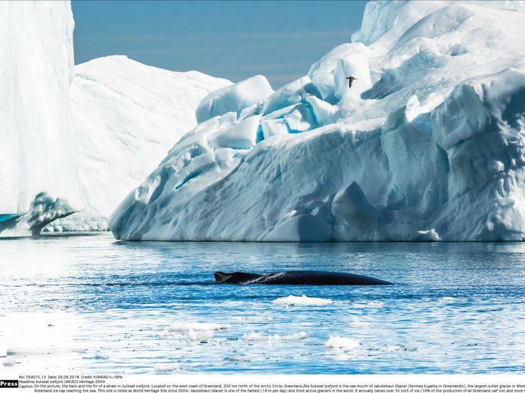 Nunavut, baleine boréale